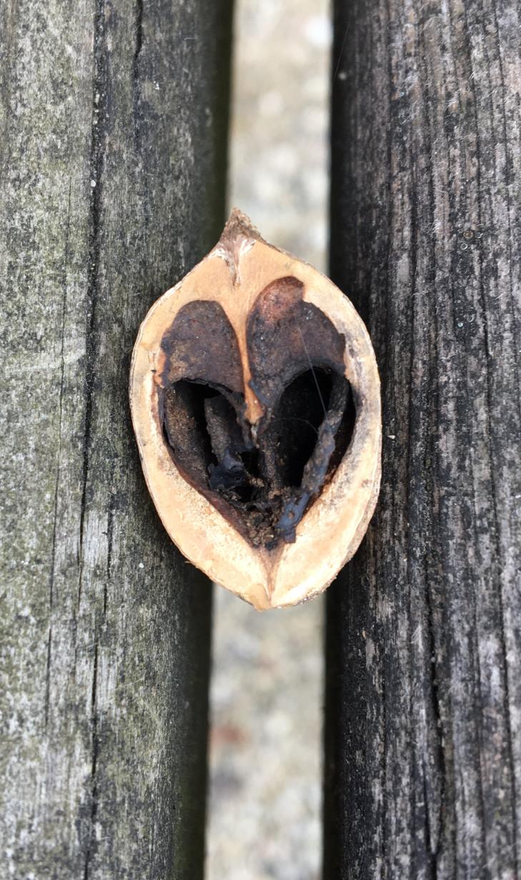 uncropped acorn love