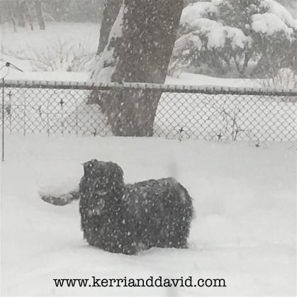 dogga in snow website box