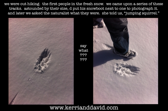 jumping squirrel tracks website box