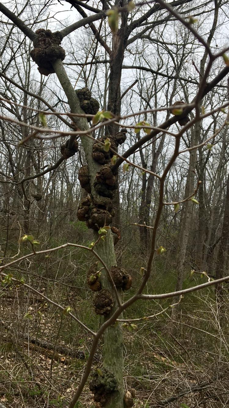 barnacle tree 1 copy