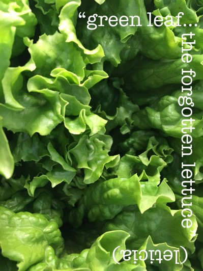 greenleafforgottenlettuce copy