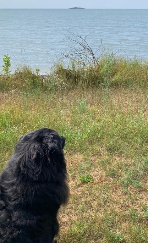 dogdog pondering copy.jpg
