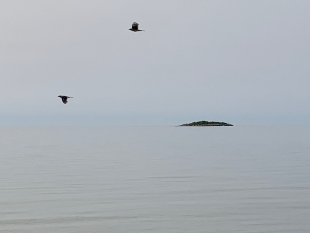 two birds and an island