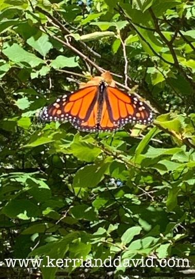 butterfly website box.jpg