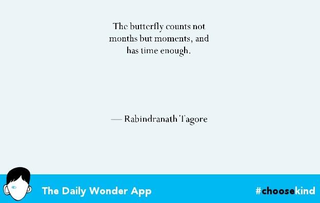 wonder app quote