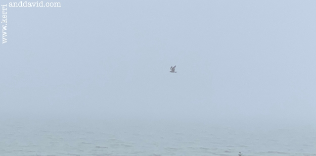 seagull in fog website box