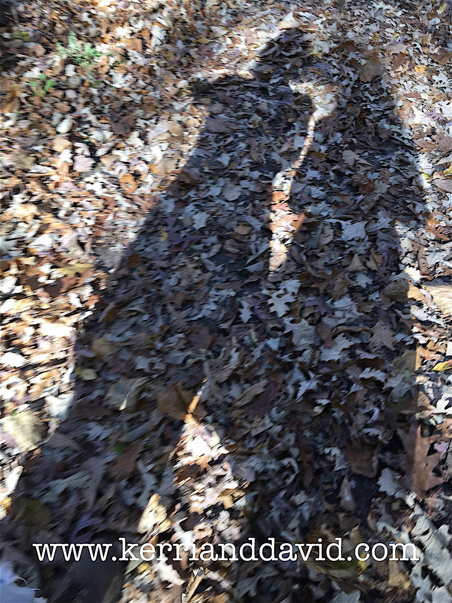 shadow bristol woods website.jpg