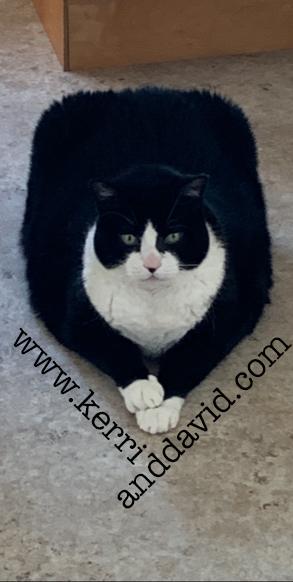 squarecat website box