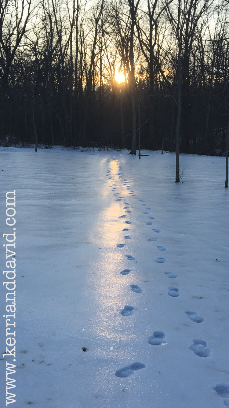 footprints in sunlit snow website box