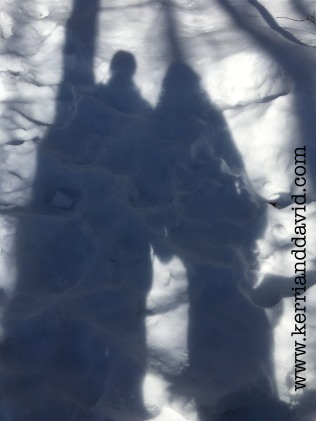 shadows in snowy woods website box