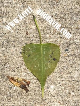 green heart leaf website box
