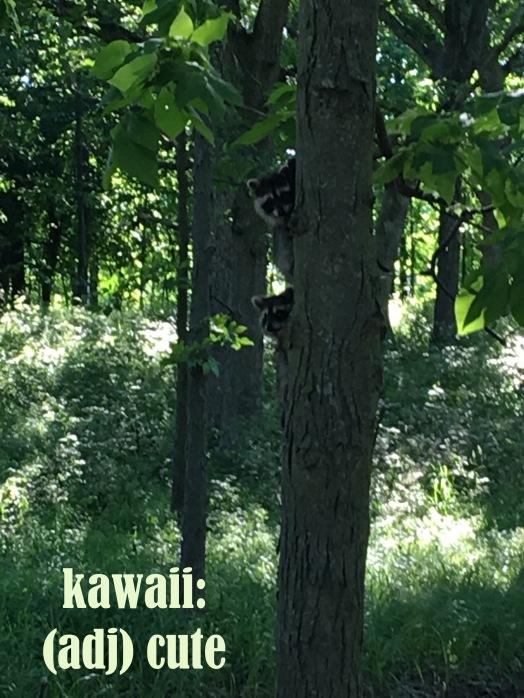 kawaii raccoons